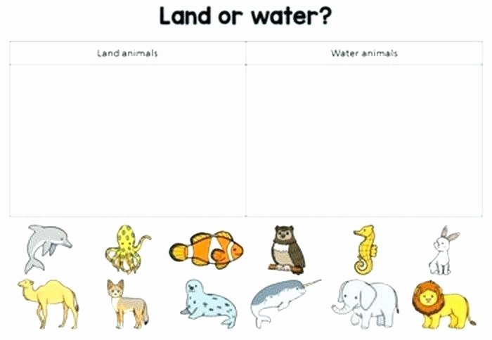 3rd Grade Habitat Worksheets Animals In their Habitats Worksheets
