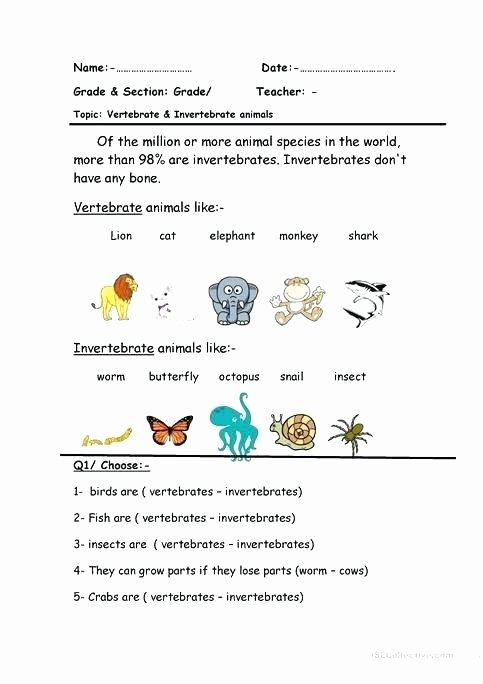 3rd Grade Habitat Worksheets Insect Habitat Worksheets Ocean for Kindergarten Math Free