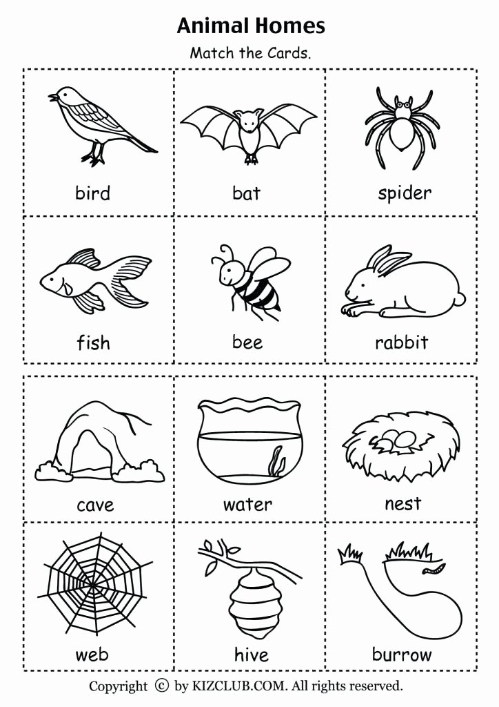5 Senses Kindergarten Worksheets 5 Senses Worksheets Five Senses Worksheets Name 5 Sense
