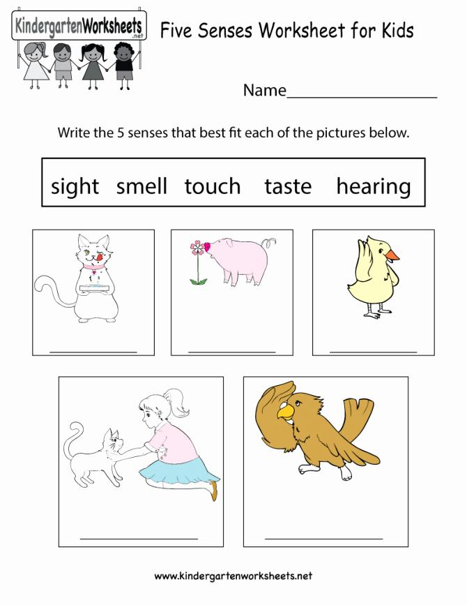 5 Senses Kindergarten Worksheets 5 Senses Worksheets for Kindergarten the Five Preschoolers