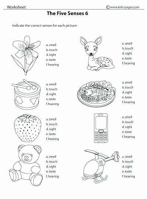 5 Senses Kindergarten Worksheets Kindergarten Science Worksheets