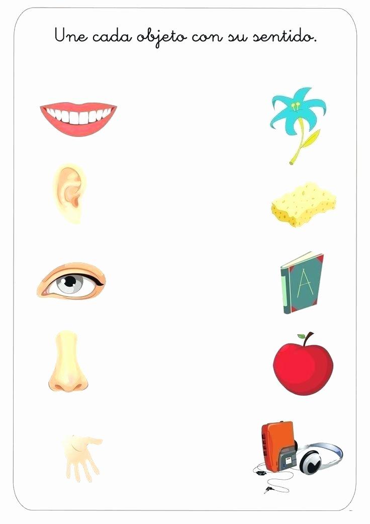 match 5 senses worksheet for kids sense organs kindergarten five match 5 senses worksheet for kids sense organs kindergarten five worksheets number sense worksheets kindergarten pdf