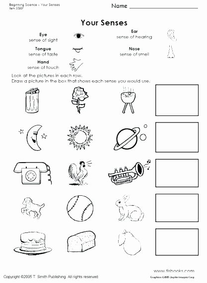5 Senses Printable Worksheets Kindergarten Science Worksheets Printable Dress Up In Summer