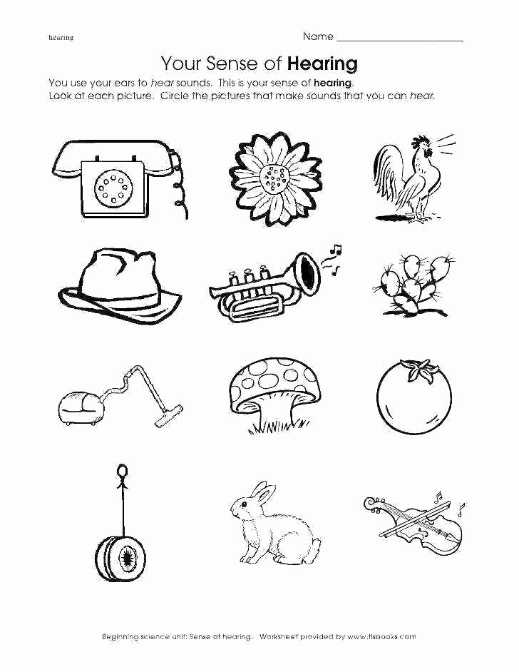 5 Senses Printable Worksheets Sense organs Worksheets for Grade 4 Kindergarten Science