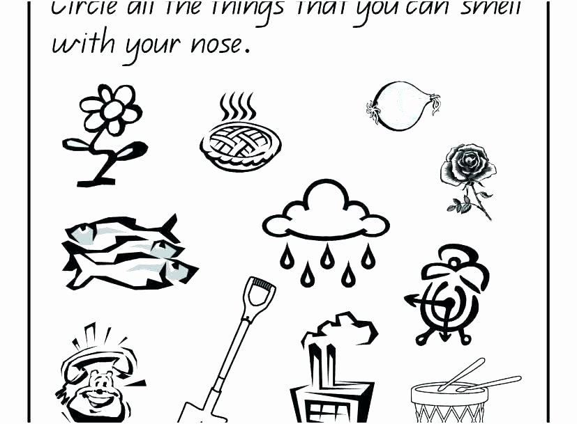 5 Senses Printable Worksheets Senses Coloring Pages – Konjure