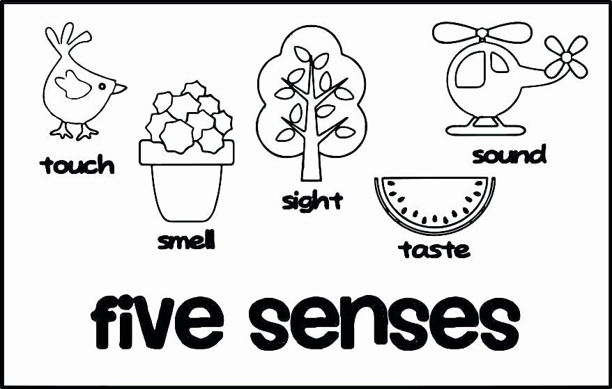 5 Senses Worksheet for Kindergarten Five Senses for Kids Worksheet Cloud Grade 2 – Eloisereesub
