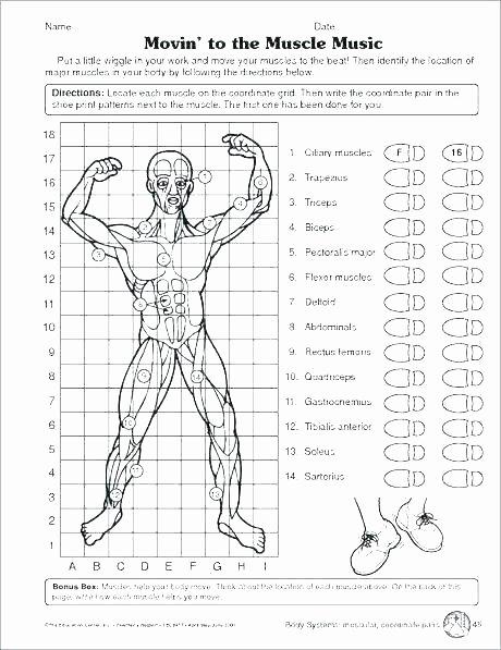 5 Senses Worksheet for Kindergarten Human Body Worksheets for Kindergarten Free 5 Senses