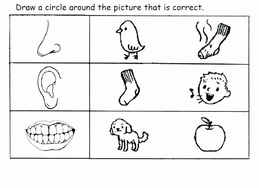 5 Senses Worksheet for Kindergarten Sensory Worksheets Sense Taste Worksheets for