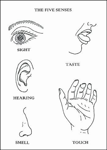 5 Senses Worksheet Preschool 5 Senses Coloring Pages