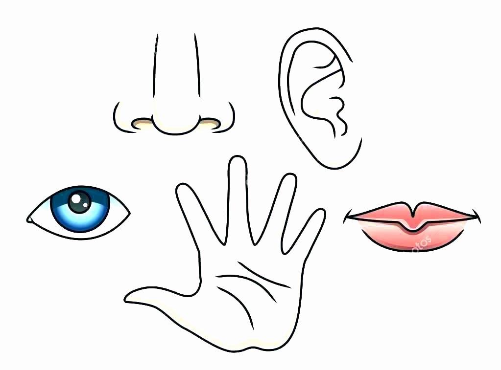 5 Senses Worksheet Preschool 5 Senses Worksheet Preschool the Five Senses Words Activity