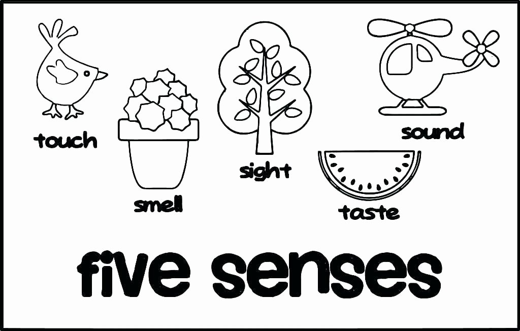5 Senses Worksheet Preschool Body Parts Printable Flashcards Bo S Worksheets and Sense