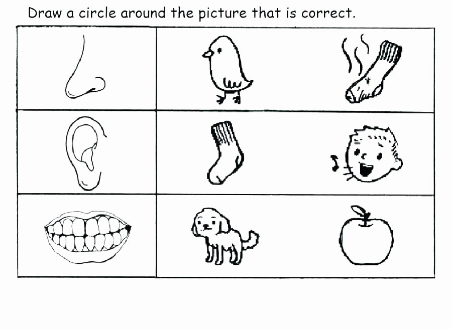 5 Senses Worksheet Preschool Your Five Senses Worksheet A Snapshot Image Sensory