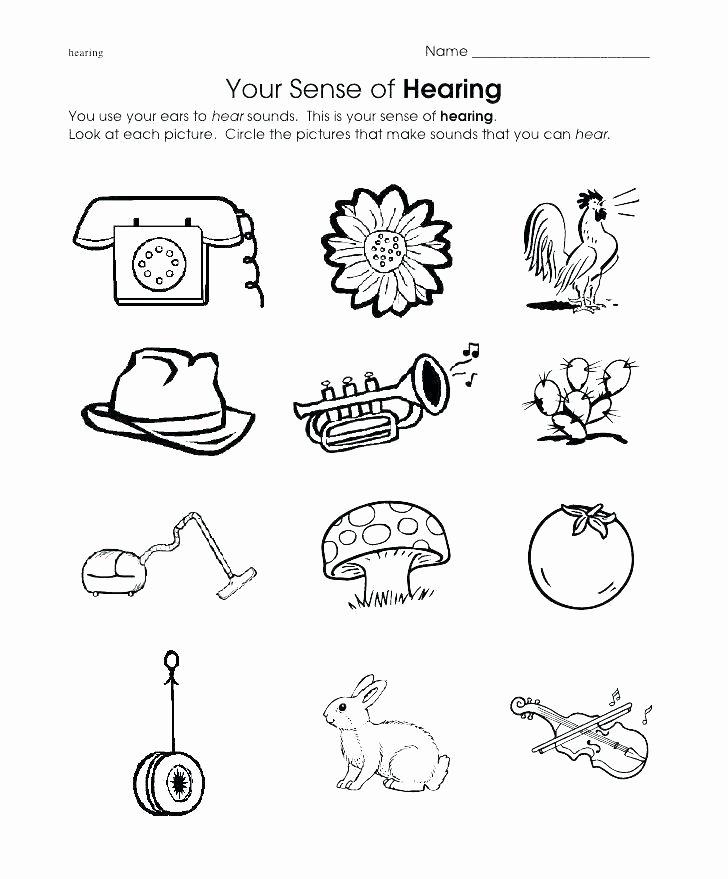 5 Senses Worksheets for Kindergarten Kindergarten Ience Worksheets Five Senses Inside Printable