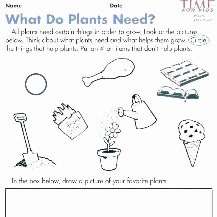 5 Senses Worksheets for Kindergarten Kindergarten Science Worksheets