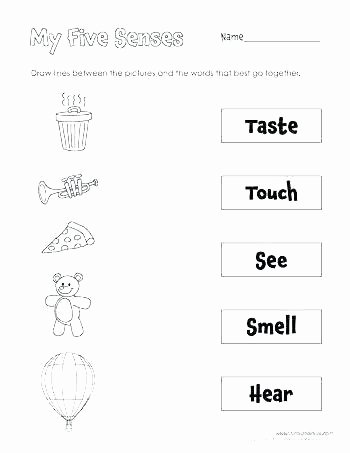 5 Senses Worksheets for Kindergarten Number Sense Worksheets First Grade Fresh Multiplication 2 Math