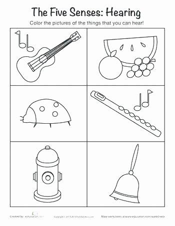 5 Senses Worksheets Kindergarten 5 Senses Book Kindergarten