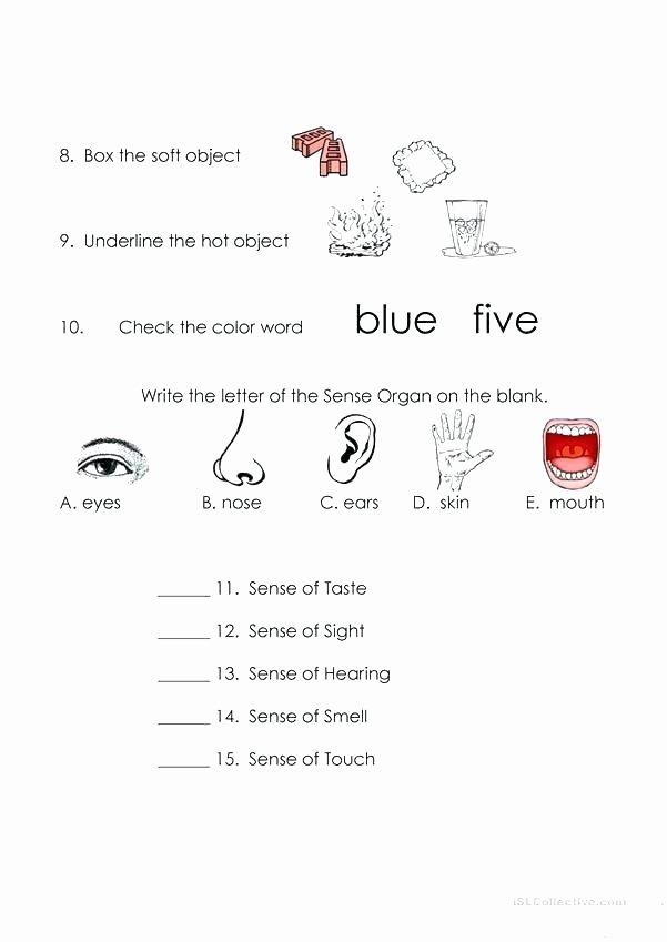 5 Senses Worksheets Kindergarten Free Printable Five Senses Worksheets Sense organs Worksheet