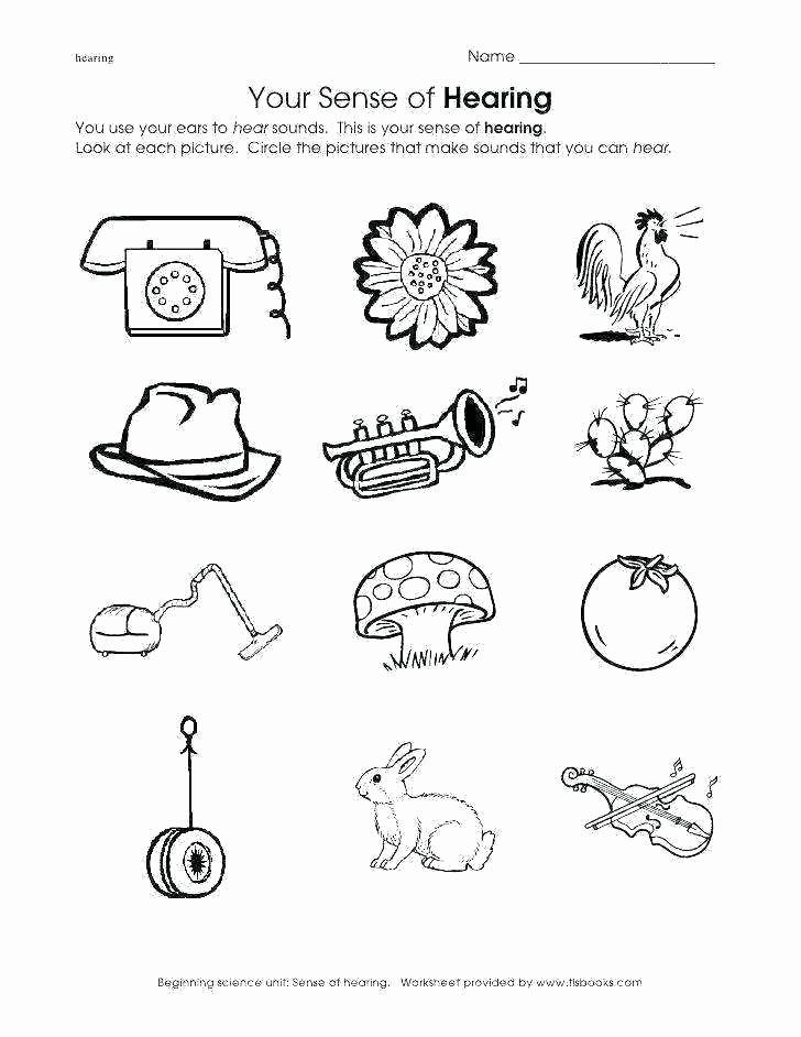 5 Senses Worksheets Kindergarten Sense organs Worksheets for Grade 4 Kindergarten Science