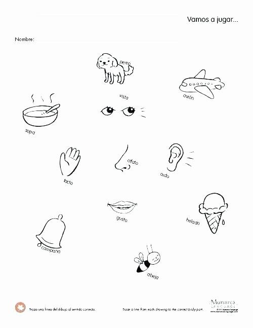 5 Senses Worksheets Pdf Number Sense Worksheets Kindergarten Lovely for Math All D