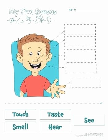 5 Senses Worksheets Preschool Beautiful Five Senses Worksheet the Five Senses 6 Sense organs Working