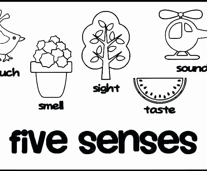 5 Senses Worksheets Preschool Best Of 5 Senses Coloring Pages Free – Littapes