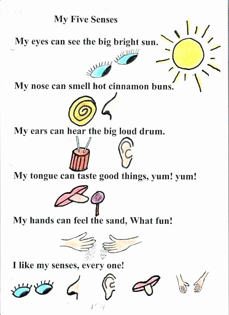 5 Senses Worksheets Preschool Elegant Kindergarten Science Worksheets Five Senses Kindergarten