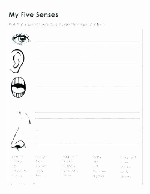 5 Senses Worksheets Preschool New Five Senses Worksheets for Kindergarten