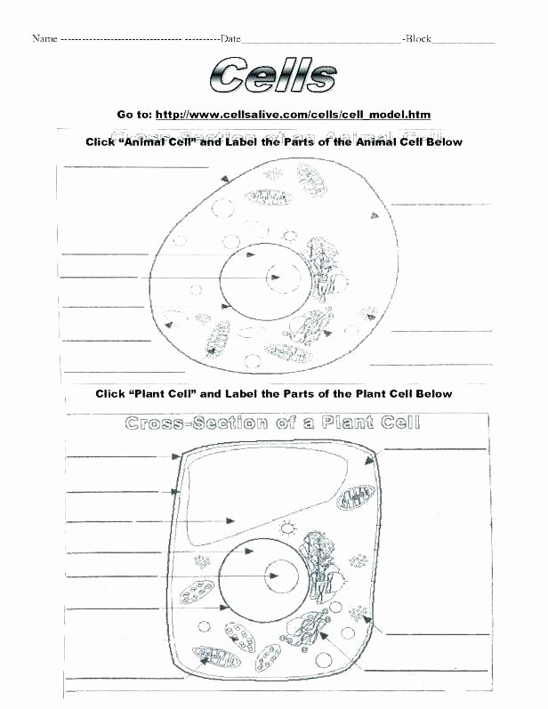 5th Grade Cell Worksheets Cell Label Worksheets – Primalvape