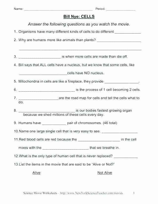 5th Grade Cell Worksheets Grade Cell Worksheets Plant Vs Animal Cells Diagram and for