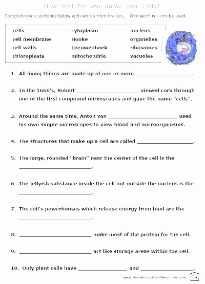 6th Grade Science Energy Worksheets First Grade Science Worksheets Pdf