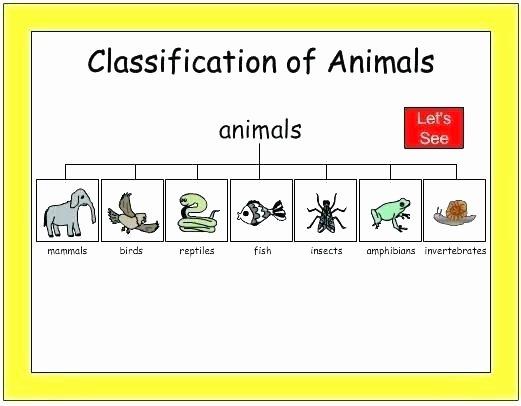 Amphibian Worksheets for Second Grade Animal Kingdom Worksheets Teaching Invertebrates Pdf sorting
