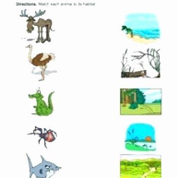 Amphibian Worksheets for Second Grade Habitats Worksheets Animal Habitats Worksheets Animals and
