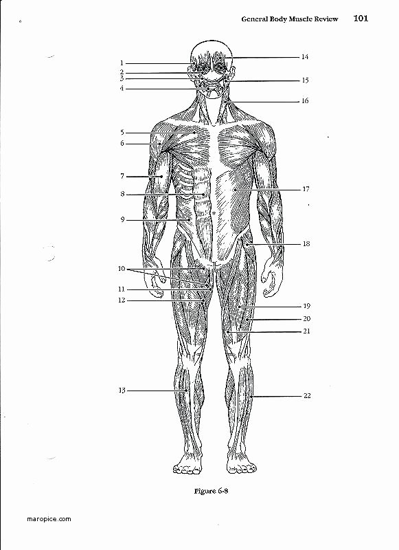 Anatomy and Physiology Blank Diagrams Best Of Skull Diagram Blank