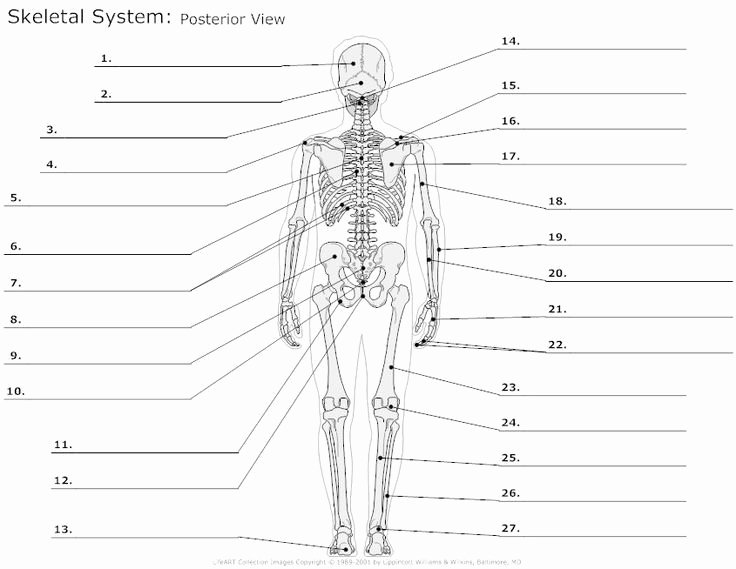 Anatomy and Physiology Labeling Worksheets Anatomy and Physiology Worksheets