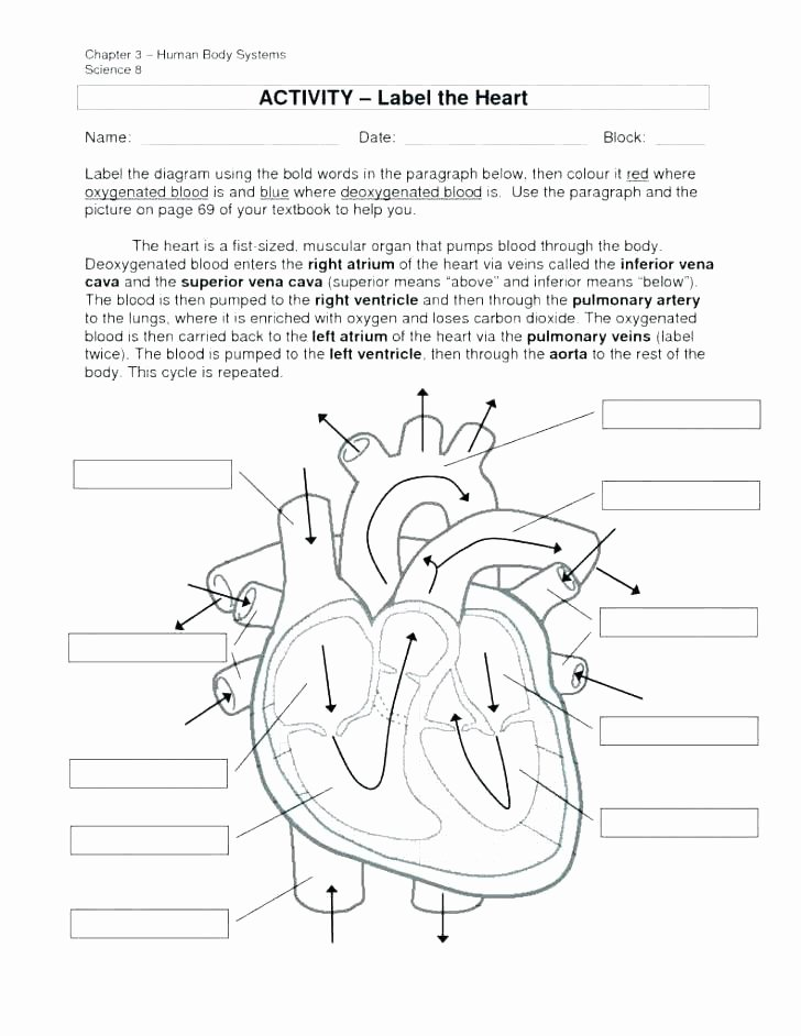Anatomy and Physiology Labeling Worksheets Body Systems Worksheets Answers