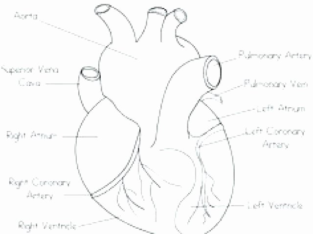 Anatomy and Physiology Labeling Worksheets Pig Internal and External Anatomy Label Worksheet Heart