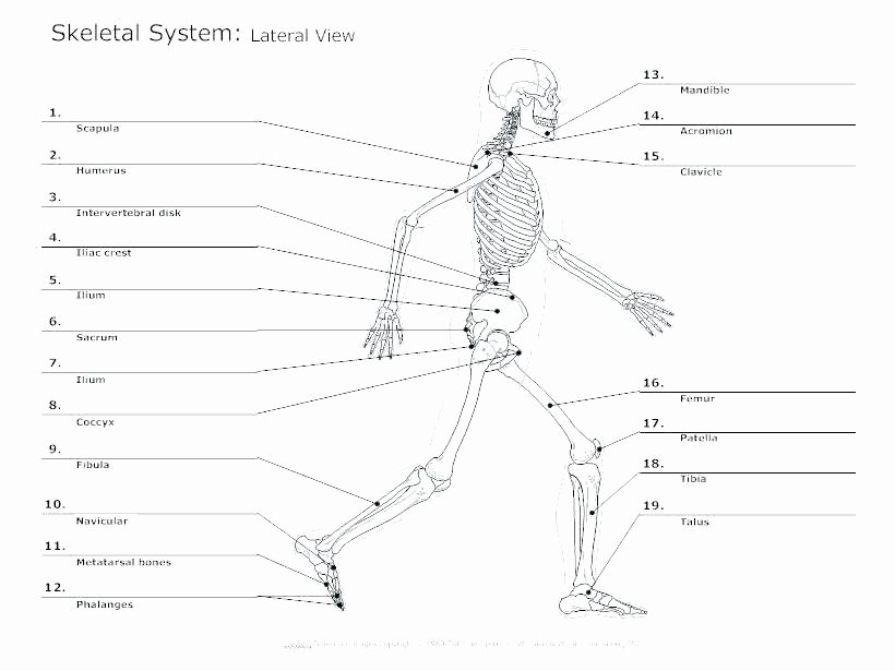 Anatomy and Physiology Labeling Worksheets Skeleton Parts Printable Human Anatomy and Physiology
