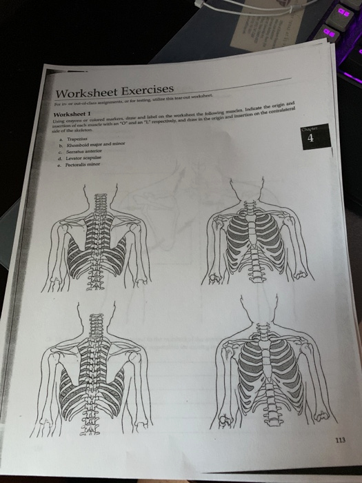 Anatomy and Physiology Labeling Worksheets Worksheet Exercises for In Out Ofclass asianmen