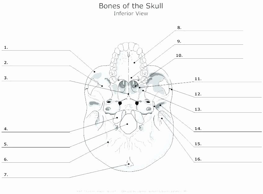 Anatomy Labeling Worksheets Labelimg Download