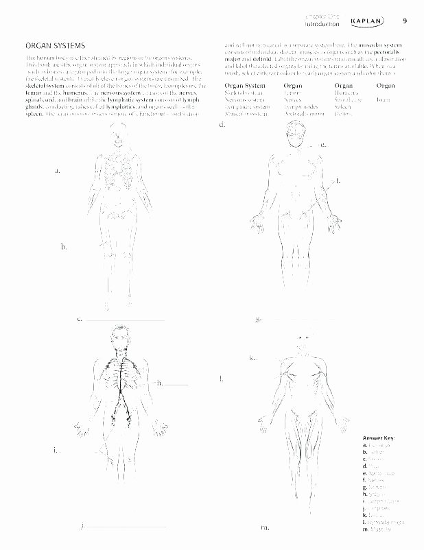 Anatomy Labeling Worksheets Labelimg Download