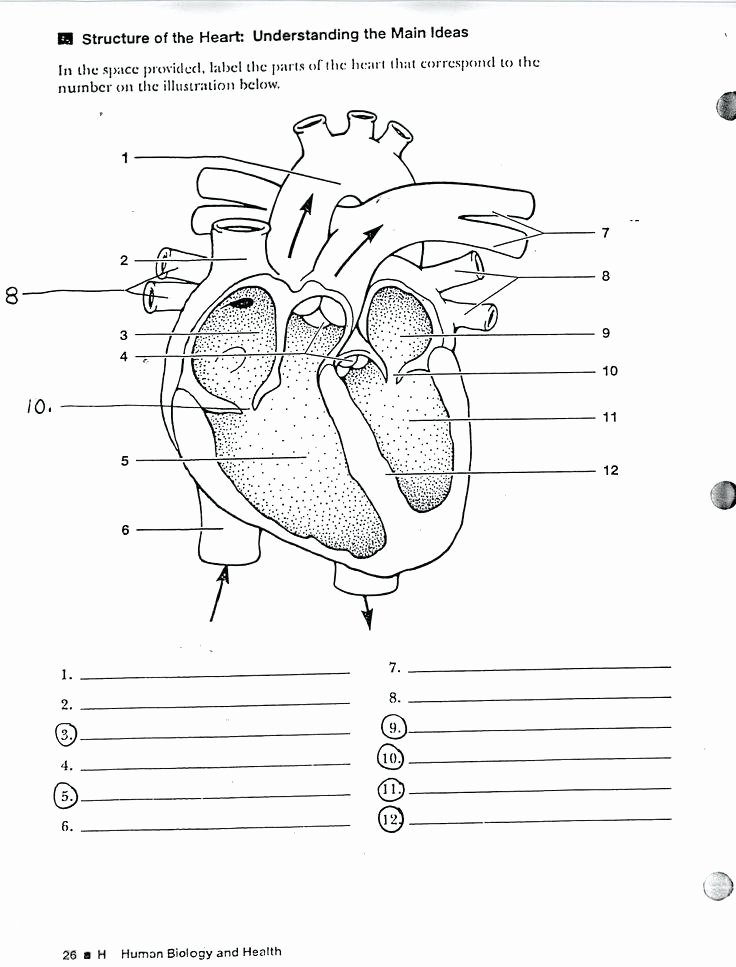 Anatomy Labeling Worksheets Structure the Heart Worksheet Best About Anatomy