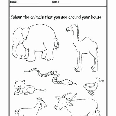 Animal and their Habitats Worksheets Animals In their Habitats Worksheets