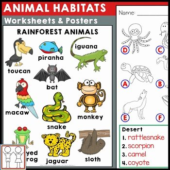Animal and their Habitats Worksheets Habitat Worksheet