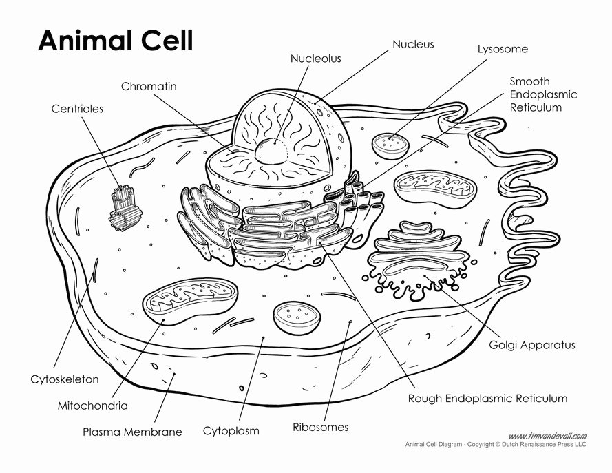 Animal Cell Blank Worksheet 23 Lovely Animal Cell Coloring Worksheet