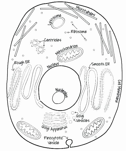 Animal Cell Blank Worksheet Animal Cell Coloring Page with Labels – Lifewiththepeppers