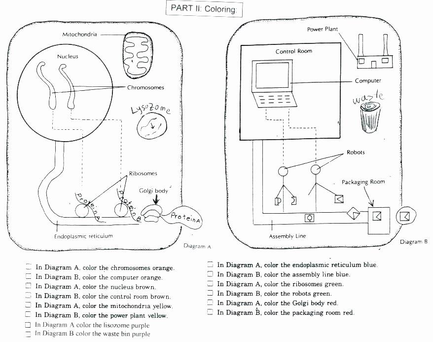 Animal Cell Blank Worksheet Cell Coloring Worksheet