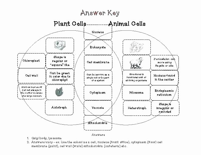 Animal Cell Labeling Worksheet Answers Luxury Animal and Plant Cell Worksheets Labelling
