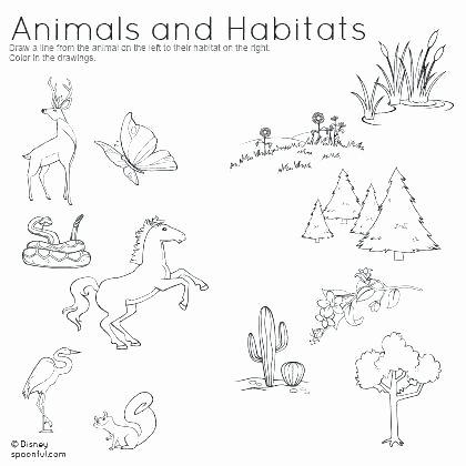 Animal Habitat Worksheets for Kindergarten Zoo Worksheets for First Grade