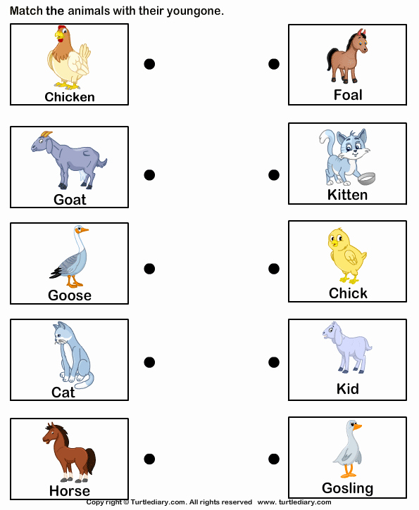 Animal Homes Worksheet Class 1 Term 3 Mathematics Addition Video On Addition