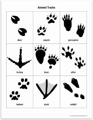 Animal Homes Worksheet Free Animal Tracks Matching Game Printables